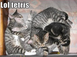 funny-pictures-kittens-lol-tetris